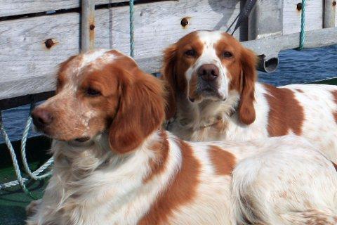 MÅTTE BØTE MED LIVET: Hundene Tiff (4) og René (8) var godt premierte, og var kjær for sin eier. De mistet livet da reineier så seg nødt til å beskytte reinene sine.