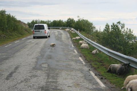 «MÅ BORT»: – Sauer langs veiene skaper mange farlige trafikksituasjoner, ifølge Anthon Sivertsen.