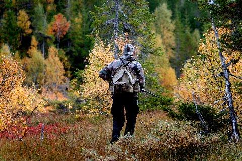 Bjørn og ulv lever ganske trygt i norske skoger. Situasjonen er verre for jerv og gaupe. Det felles flere jerv under skadefelling enn under kvotejakt, viser tall fra SSB.