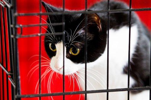 Det er veldig viktig at folk melder fra hvis de har mistanke om dyr som ikke har det bra, sier Torunn Knævelsrud, som leder seksjon dyrevelferd i Mattilsynet. Illustrasjonsfoto