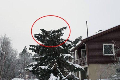 AVKAPPET: Noen har sett sitt snitt å hogge av tretoppen, trolig for å få seg et fint juletre.
