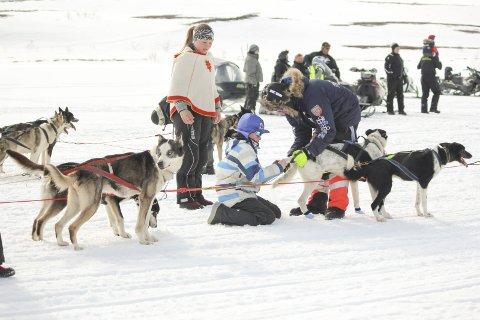 O KLASSER: Barnas finnmarksløpbestår i år av to klasser, og rundt 20 kjørere har meldt seg på. Foto: Hans Johan Aslaksen