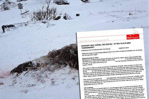 FÅR PÅMINNING: Etter en bekymringsmelding om døde og halvdøde rein i Hasvik kommune, opprettet Mattilsynet sak. I rapporten minnes reineieren på å ha tett oppfølging av dyr som har blitt transportert og dyr som er svake.