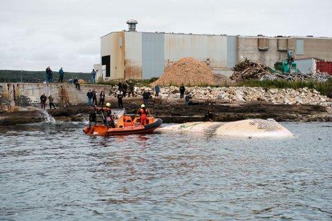 FJERNER HVALEN: Kystvakten fjerner en hval fra sjøen utenfor Vadsøya. Morten Amundsen måtte ta seg en tur på den døde hvalen for å få festet tau på den.