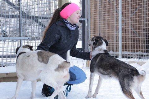 Helene Sørensen har avbrutt Finnmarksløpet etter at hun skal ha blitt påkjørt av en snøscooter.