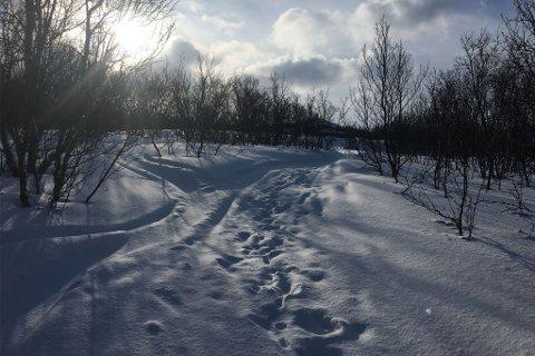 I SCOOTERSPORET: I dette området i Olderfjord skjedde dødsulykken natt til søndag. En ung mann er nå siktet etter straffelovens paragraf 281 for uaktsomt å ha forvoldt en annens død