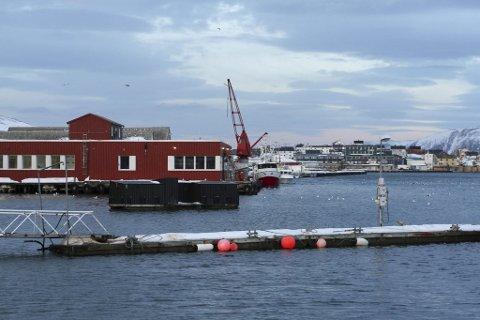 GRØNN HAVN: Båtsfjord havn blir stadig mer grønn. Slik blir det heder og ære av.