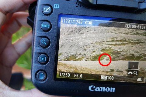 TOK BILDER: Turistene tok bilder av det de mente var isbjørn.
