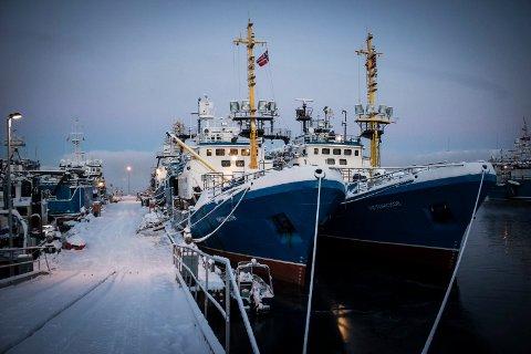 STRIDSSPØRSMÅLET: Høyesterett skal bestemme om snøkrabben rundt Svalbard er en fisk som hører til vannmassene, eller en sedementær art på havbunnen. Hvis den er en fisk, må Norge dele den med andre land. EU mener europeiske fartøyer har samme rett til å fange snøkrabbe utenfor Svalbard som norske fartøyer. Bildet viser krabbetrålere, som er et vanlig syn i Kirkenes.