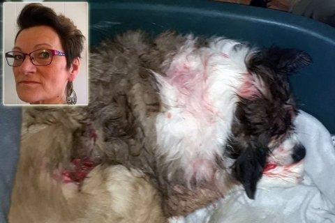 - MER DØD ENN LEVENDE: Inger Sara sier at den mellomstore hunden Chika var mer død enn levende da de kom til dyrlegen, etter ørneangrepet.