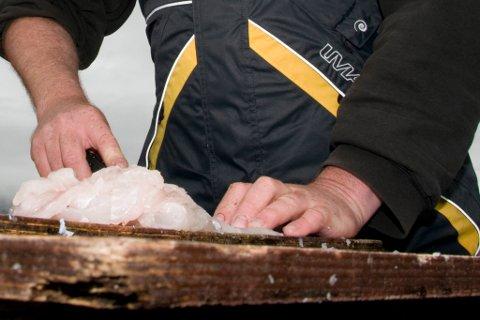 FILET: Turistfiskere tar ofte kun med seg fileten på fiske.