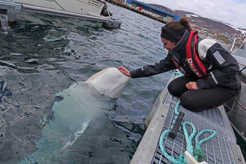 SYK: Hvalforsker Eve Jourdain sier at belugahvalen Hvaldimir er blitt syk.