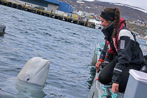 FORSVANT: Hvaldimir forsvant fra Hammerfest havn i helga. Hvalforsker Eve Jourdain som passer på ham, håper folk kan holde ham opptatt der han dukker opp, slik at de får tid til å tenke ut en klar plan.