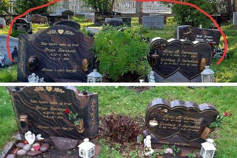 RASERT: Vibeke Sørensen reagerer på at noen har kuttet ned rognebusken som står plantet mellom foreldrene og broren sine graver. Vedkommende har ifølge Sørensen også slengt kvister oppå graven.