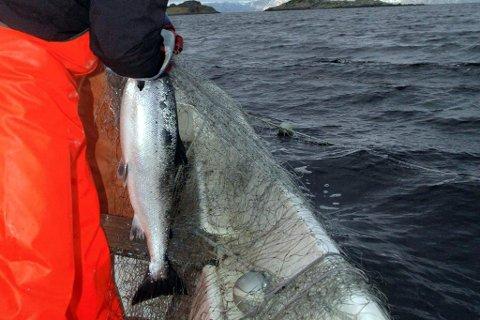 BEGRENSET FIKSE: Vi som laget Norges første avtaler med sjølaksefiskere, ønsker ikke full stopp for alltid, men en felles innsats for å bygge opp bestander, skriver artikkelforfatteren. Illustrasjon.