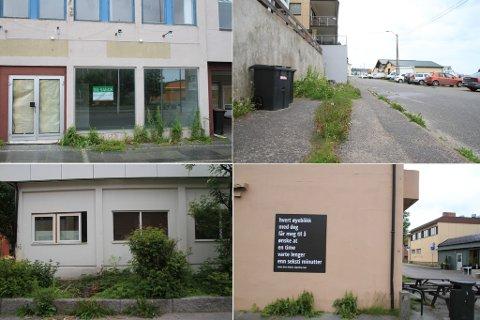 OVERGRODD: Ugresset har tatt over i store deler av Vadsø sentrum.