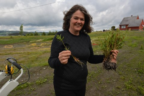 PLANTER: Elin har planta 150 frukttrær, bringebær og stauder. Nå er hun i gang med prosjekt pilegjerde. Hagearbeid har blitt viktig medisin i hverdagen.  Jeg lever fra dag til dag og har problemer med langsiktig planlegging, sier hun.