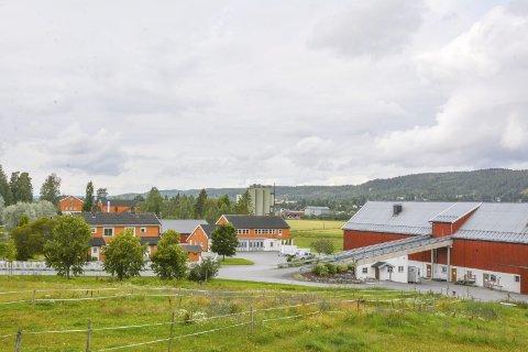 STØRRE: - I år har vi en større klasse på Vg2 Naturbruk (18 elever) enn vi har hatt de to siste årene, sier rektor Øyvind Sæteren ved Kjelle videregående skole: Foto: Anne Enger Mjåland