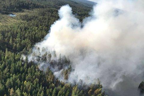 Etterforskes: Denne skogbrannen på Rømskog kan ha blitt forårsaket av et bål ved ei strand i bygda. Politiet etterforsker saken.