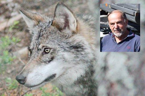 Tidligere rovviltkontakt, John Sigmund Moen fra Rømskog, mener det er en underrapportering av antall ulv i Norge. Tirsdag demonstrerer han og mange andre mot regjeringens rovdyrvedtak. Foto: Anita Jacobsen/Trym Helbostad