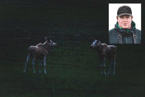 UTLYSER KONKURRANSE: Stian Herlofsen (innfelt), Indre Akershus Blad og Setten Hyttepark utlyser navnekonkurranse for de to hvite elgene Herlofsen fotograferte på Setskog.