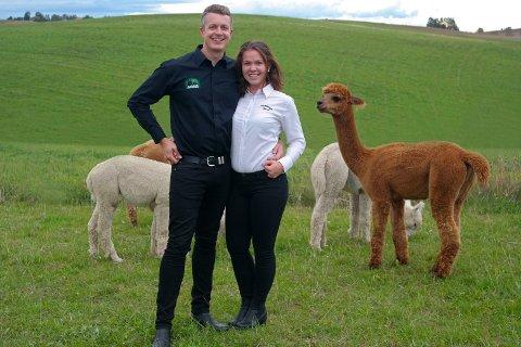 FULLE DAGER: Paret Bjørn Brændshøi (t.v) og Alexandra Martinsen (t.h) har hatt fulle dager i sommer med alpakkaturer.