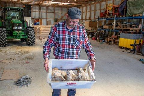 HODEMIST: Hanssen tok med seg sauehodene hjem da han ikke syns de hadde noe i grøften å gjøre.
