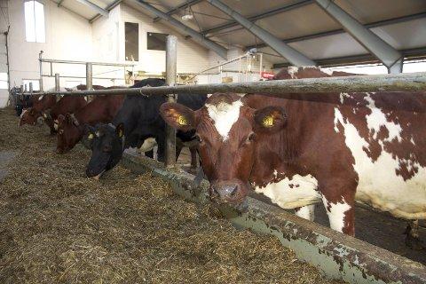 Mattilsynet Sør og Vest har utført tilsyn ved 2090 dyrehold, fra 1. januar til 31. august.