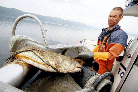IKKE BERØRT: Kjetil Andersen er oppgitt over at Fiskeridirektoratet unnlater å nevne at fiskere som ham kan få dispensasjon til å fortsette å dra inn torsk. (Arkivfoto)