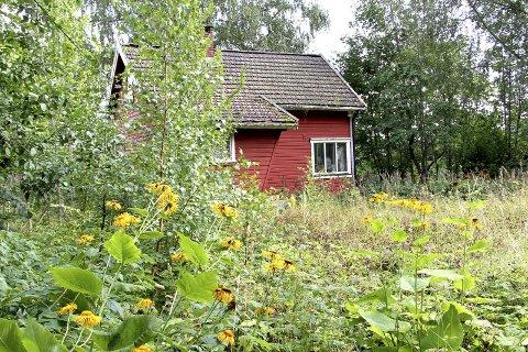 TILGRODD: Trær og busker har fått vokse fritt her ikke langt fra Båsebakken de seinere år. Foto: Lars Ivar hordnes