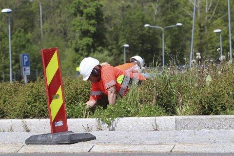 Luker på Kopstad: Her er en typisk sommerjobb fra rund-kjøringen ved Kopstad denne uken. Foto: Pål Nordby