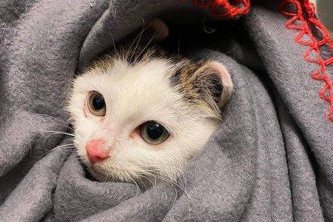 enne kattungen ble reddet sammen med resten av kullet og moren sin i mars.