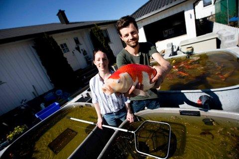 ARKIVBILDE: Marina Stokke Berge og Martin Bergersen Utkvitne driver med import av japanske hagedamfisker. De har selv en dam på rundt 50.000 liter i hagen.