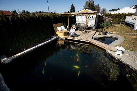 MÅ FJERNES: Hagedammen til Martin Utkvitne og Marina Stokke Berge er hjem til rundt 50 gullfisker og koi (fiskeslag), som bor i dammen året rundt.