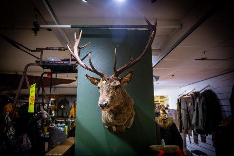 FOR STORT: Geviret er for stort til at jaktentusiasten har plass til det hjemme. Per dags dato henger det derfor i en butikk.