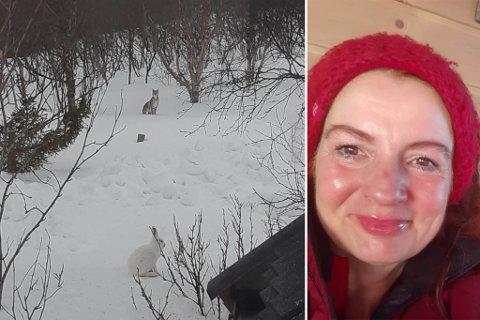 GAUPE: Her er gaupa som Monica Bakken hadde besøk av i Lanabukt i Jarfjord mandag kveld.