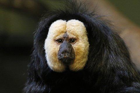 Nye aper: Slik ser apene ut. Foto: Den lille dyrehage