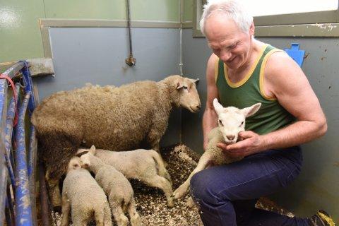 Firlingane klarar seg bra og sauemor har grunn til å vera stolt. Sauebonde Magne Heien reknar med at alle fire lamma skal klara seg bra.