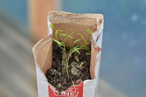 Dei første vekstane har alt begynt å spira i det nye drivhuset til Uskedalen skule.
