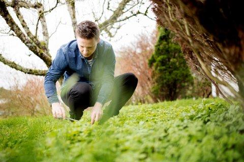 Skvallerkål er noko dei fleste har i hagen sin, men ikkje alle er klare over at den er god i mat. Her plukkar Anders Totland ut dei finaste. (Pressefoto).