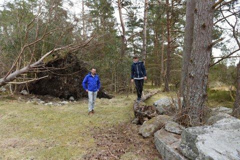 Njål (t.v.) og Mathias Tvedt viser litt av det som bør kappast opp på laurdag.