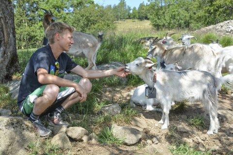 NY TEKNOLOGI: Med hjelp av heilt ny teknologi treng ikkje geitene til Øystein Eik ekte gjerde.