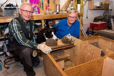 Wolfgang og Hanne Reimers har seks fosterbarn av arten pinnsvin i kjelleren. Hunden Max kan ikke få nok av småtassene.