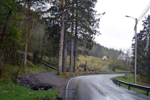 Grantrea i Herøysund må vekk for å betra tryggleiken. Det er Mesta som gjer jobben med å fjerna dei. (Arkivfoto: Peder Sjo Slettebø).