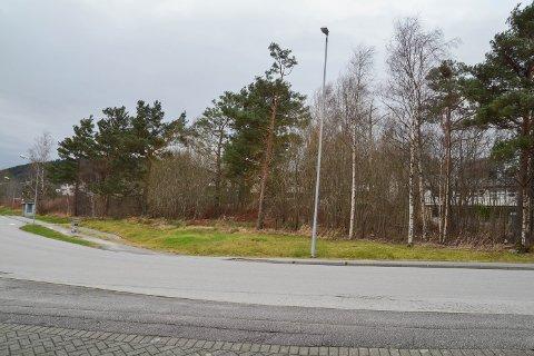 OMLEGGING: Det er dette skogholtet som vil forsvinna dersom kommunen sine planar for omlegging av Sentrumsvegen blir gjennomførte. (Arkivfoto)