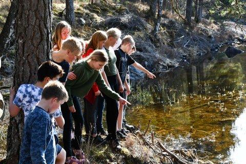 Erslandsvatnet på Sandvoll var fullt av padder. Elevar frå Skarveland skule var måndag ute for å kikka og læra meir om vårens naturfenomen.