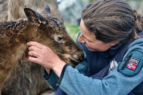 Marie Thorsson Østby Natten kan bli årets unge bonde 2018. Her fra en elgkalv-fødsel på Langedrag.
