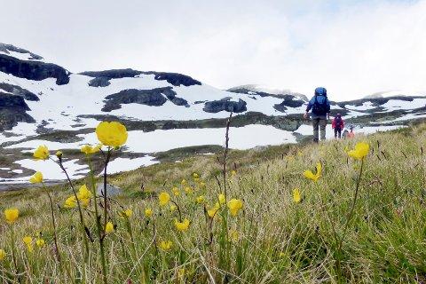 SKAL TELLES: Nå skal det settes opp totalt 80 ferdselstellere på Hardangervidda for og blant annet måle fotturistenes påvirkning på villreinen. Dette er fra turstien mellom Hellevassbu og Middalsbu.