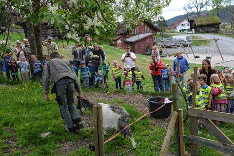 BARN OG DYR: Det årlige dyreslippet på Lågdalsmuseet samler alltid mye folk. Tirsdag skjer det iigjen.