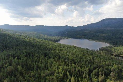 VEI GJENNOM SKOGEN: Nyveien skal legges sør for vassdraget Det betyr at noe av skogen til venstre for Buvann i bildet må vike.